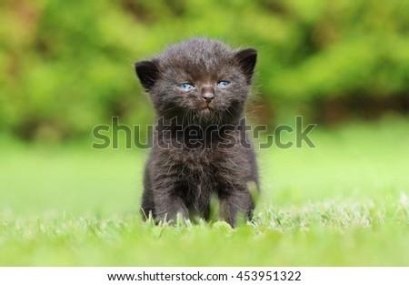 Angry black kitty - stock photo