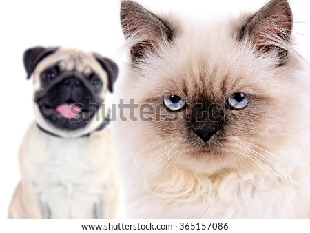 Angry cat and happy dog, isolated on white - stock photo