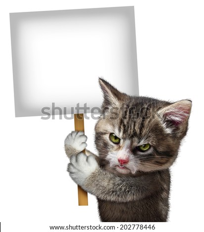 Angry cat holding a blank card sign as an annoyed and furious cute kitten feline with an enraged expression protesting a message pertaining to pet care on an isolated white background. - stock photo