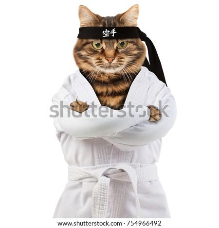 karate stock images royaltyfree images  vectors