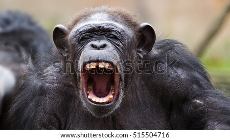 Chimpanzee Stock Images, Royalty-Free Images & Vectors ... - photo#7