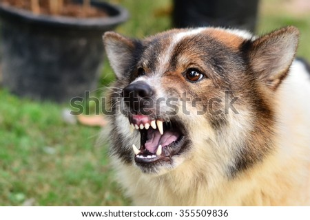 Angry dog.  - stock photo
