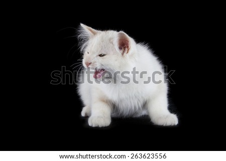 angry kitten isolated over black background - stock photo