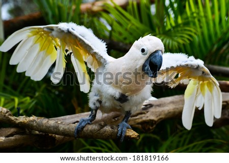 Angry parrot - Scarlat Macaw  - stock photo