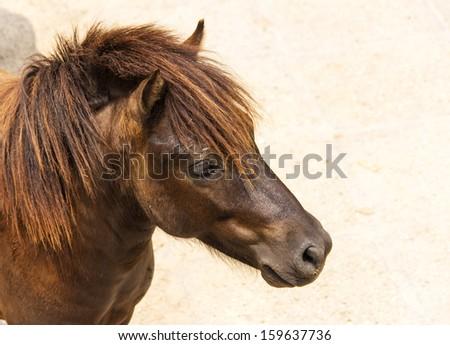 animal at zoo--horse waiting - stock photo