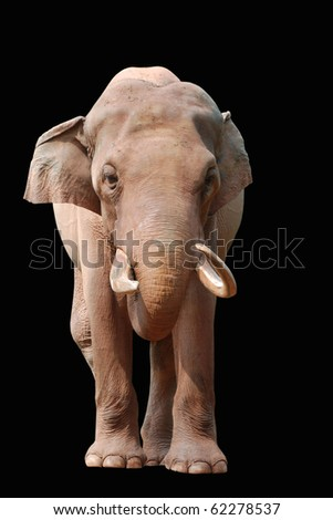 animal elephant isolated in black - stock photo