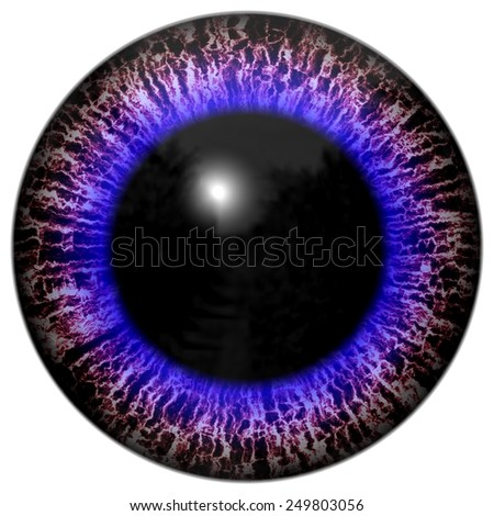 Animal eye with contrast colored iris, detail view into eye - stock photo