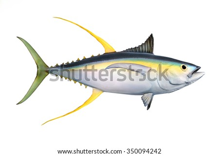 Animal.Fish.Tuna.Fishing.Isolated.Object.Animal.Fish.Tuna.Fishing.Isolated.Object.Animal.Fish.Tuna.Fishing.Isolated.Object.Animal.Fish.Tuna.Fishing.Isolated.Object.Animal.Fish.Fishing.Isolated.Fish. - stock photo