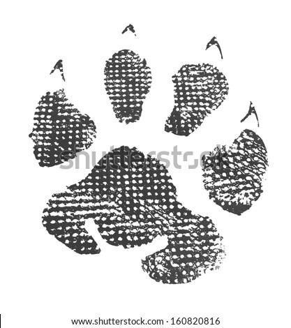 Animal footprint isolated on white background  - stock photo