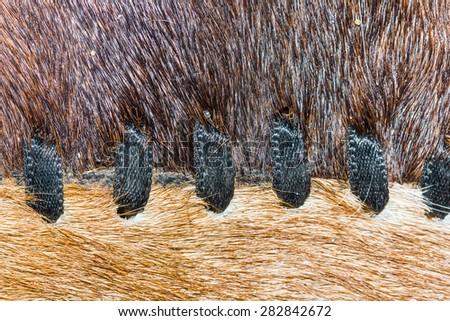 Animal fur carpet texture. - stock photo