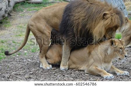 Wild couple having sex for fun 6