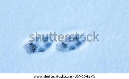 Animal paws - stock photo