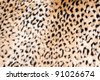Animal print background - stock photo