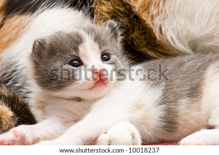 animal series: close up of little fluffy cat