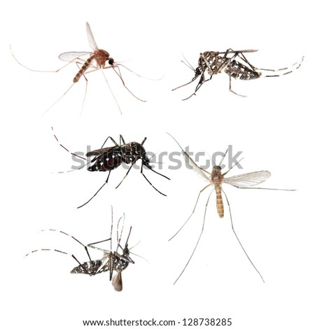 animal set, mosquito bug collection isolated