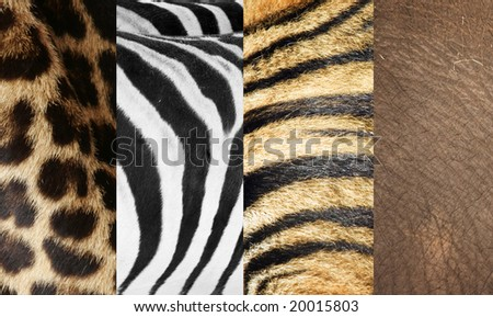 animal skins - stock photo