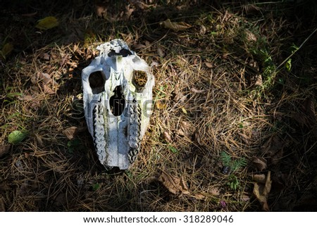 Animal skull is found in the woods - stock photo