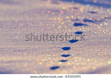 Animal tracks in the snow in a field in winter with a sunset - stock photo