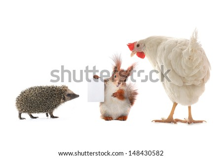 animal, with sheet for a text writing - stock photo