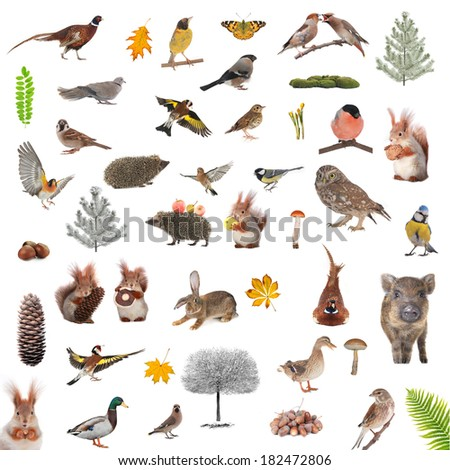 animals and birds isolated on a white background - stock photo