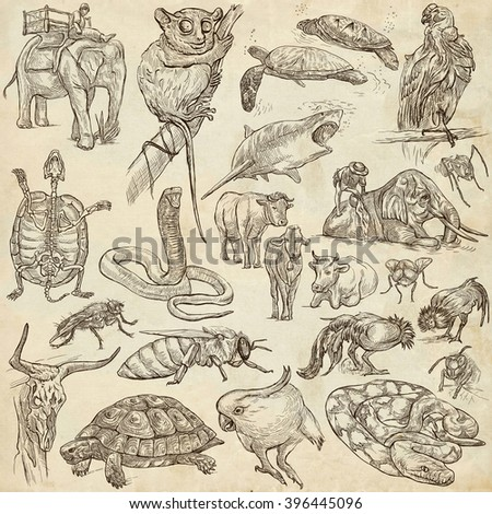 ANIMALS around the World - pack, collection - Collection of an hand drawn illustrations. Description, Full sized hand drawn illustrations (freehand sketches). Drawings on old paper. - stock photo