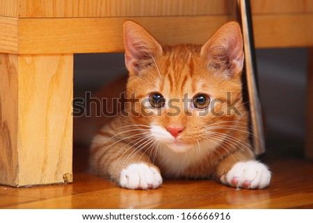 Animals at home. Red cute little baby cat pet kitten laying on floor - stock photo