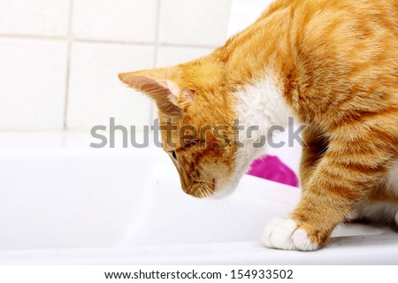 Animals at home - red cute little cat pet kitten in bathroom sink - stock photo