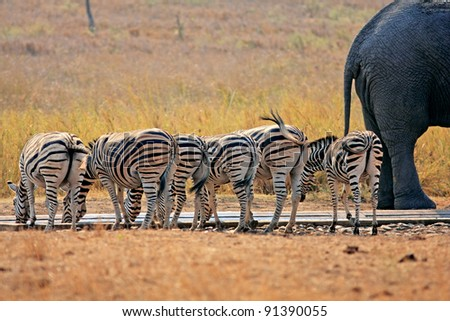 Animals at water hole - stock photo