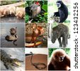 Animals collage with nine photos Thailand - stock photo