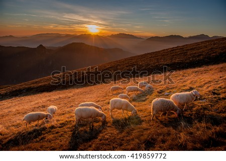 animals in freedom, grazing - stock photo