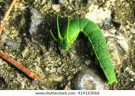 Animals, insects, caterpillars, ecology - stock photo