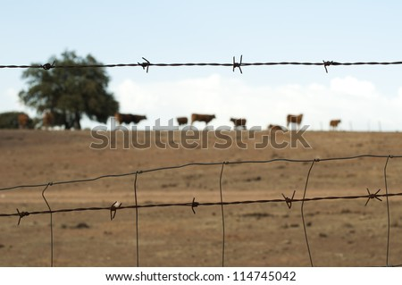 Animals on a farm surrounded by barbed wire. - stock photo