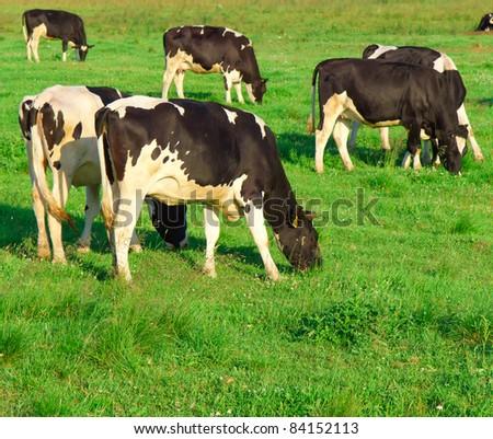 Animals Producing Milk Village - stock photo
