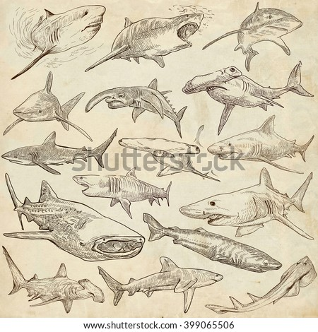 Animals, SHARKS, Chordata. Collection of an hand drawn illustrations. Description, Full sized hand drawn illustrations - freehand sketches. Drawings on old paper. - stock photo
