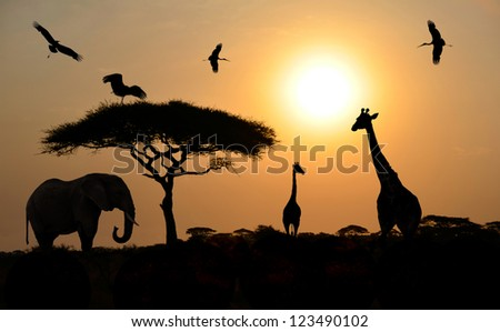 Animals silhouettes standing over sunset on safari in Africa. Elephant, Giraffes, Birds - stock photo