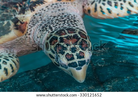 Animals such as turtles are one of the Testudines held in cold-blooded. In reptiles - stock photo