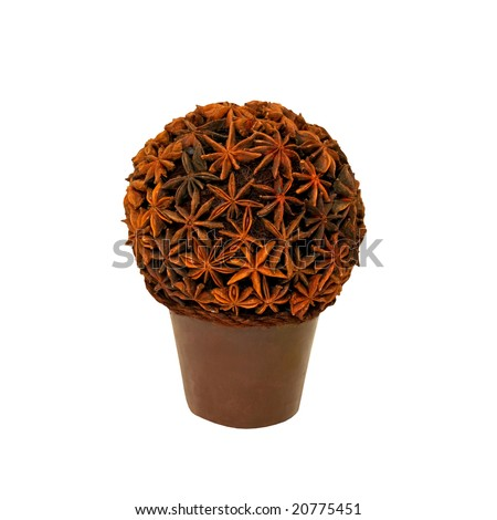 Anise aromatic plant isolated with clipping path