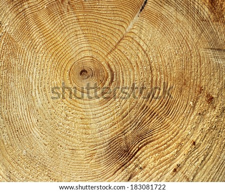 Annual growth rings circle pattern in tree stump - stock photo