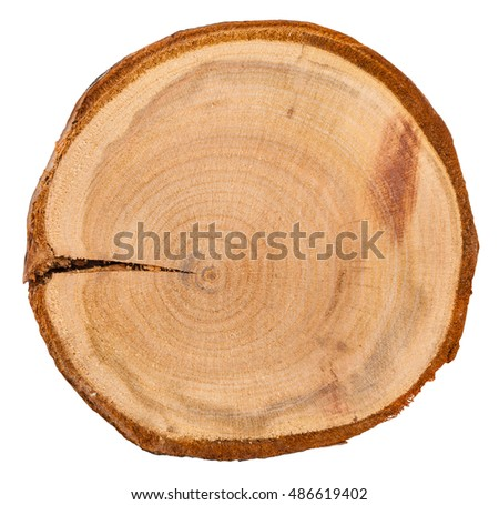 annual growth rings in cross section of plum tree trunk isolated on white background