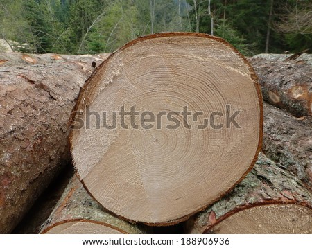 Annual rings of an approximately 80-year-old spruce. Dendrochronology or tree-ring dating, is the scientific method of dating based on the analysis of patterns of tree rings, also growth rings. - stock photo