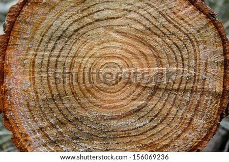 annual rings on a tree trunk - stock photo
