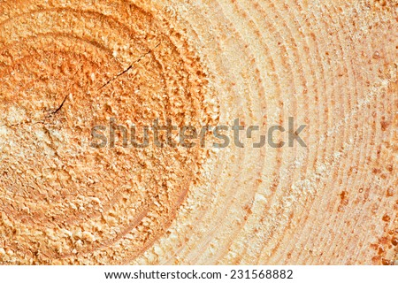 Annual Rings On Sawn Pine Tree Timber Wood Texture Background - stock photo