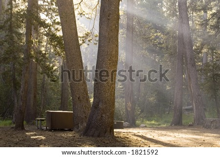 Another Summer Morning in Tuolumne Meadows Campground - stock photo