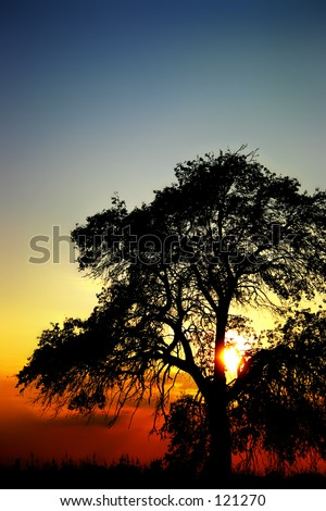 Another sunset with a tree. - stock photo