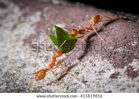 Ant. - stock photo