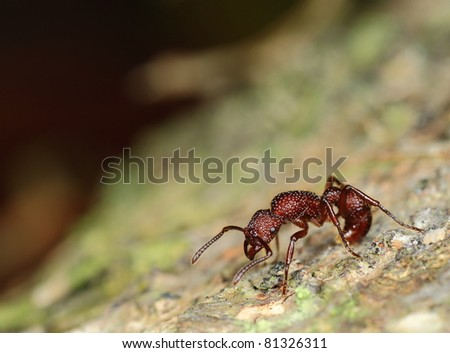 ant - stock photo