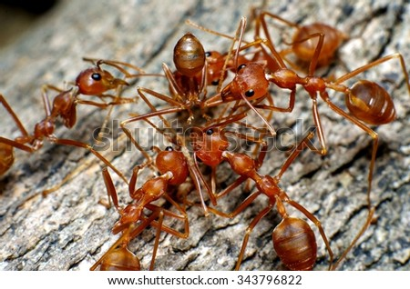 Ant activity in thailand