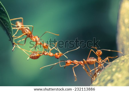 Ant bridge unity - stock photo