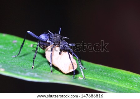Ant carry egg - stock photo