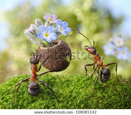 ant gives gift -  flowers with sweets, juicy greenflies, ants tales - stock photo